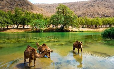 Salalah Jabel Safari