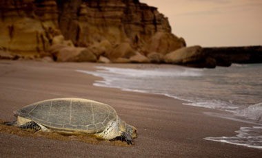 The Blissful Dubai with Oman Turtle Watching