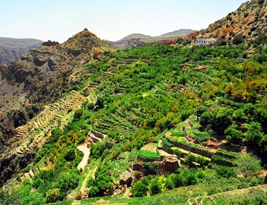 Jebel Akhtar (Green Mountain) Tour